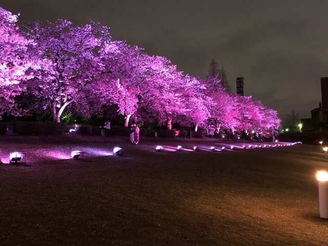 桜は何度見ても飽きぬ